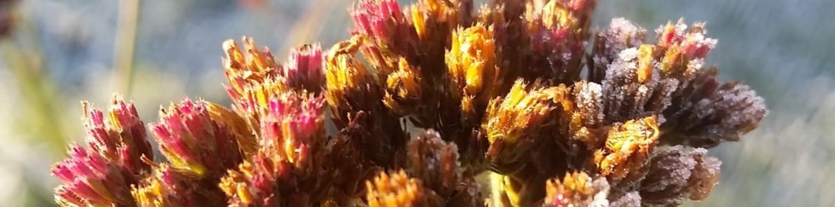 Header-blomst1.jpg